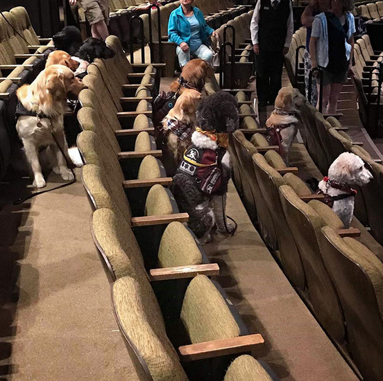cães de serviço teatro 2