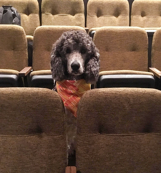 cães de serviço teatro 3