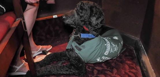 cães de serviço teatro 6