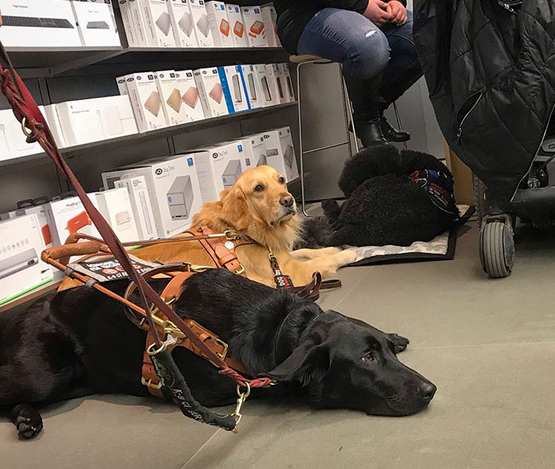 cães de serviço teatro 7