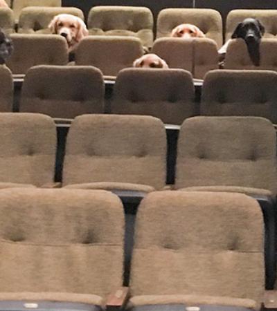 Cães de serviço assistem a espetáculo de dança para aprender a se comportar em teatro