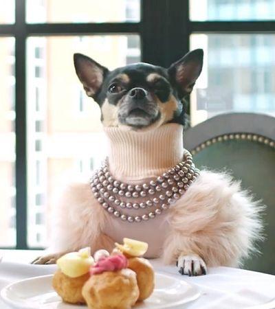 Site procura cachorro para ser crítico de hotéis; entenda