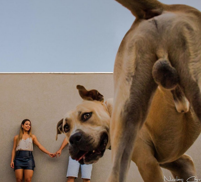 ensaio casamento cachorro 1