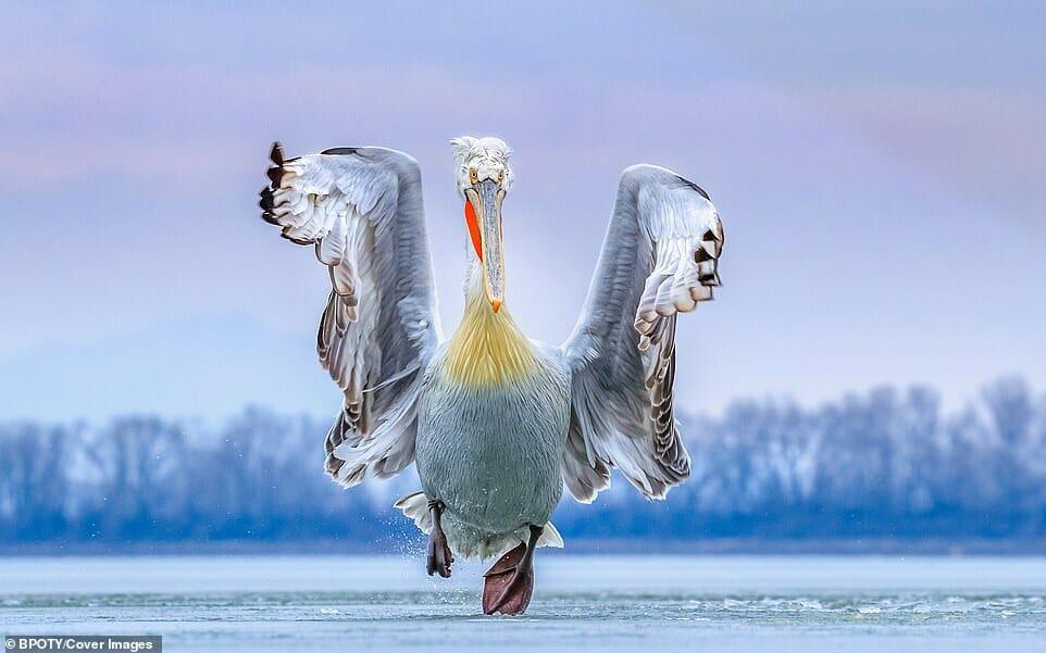 fotos Bird Photographer Year 1