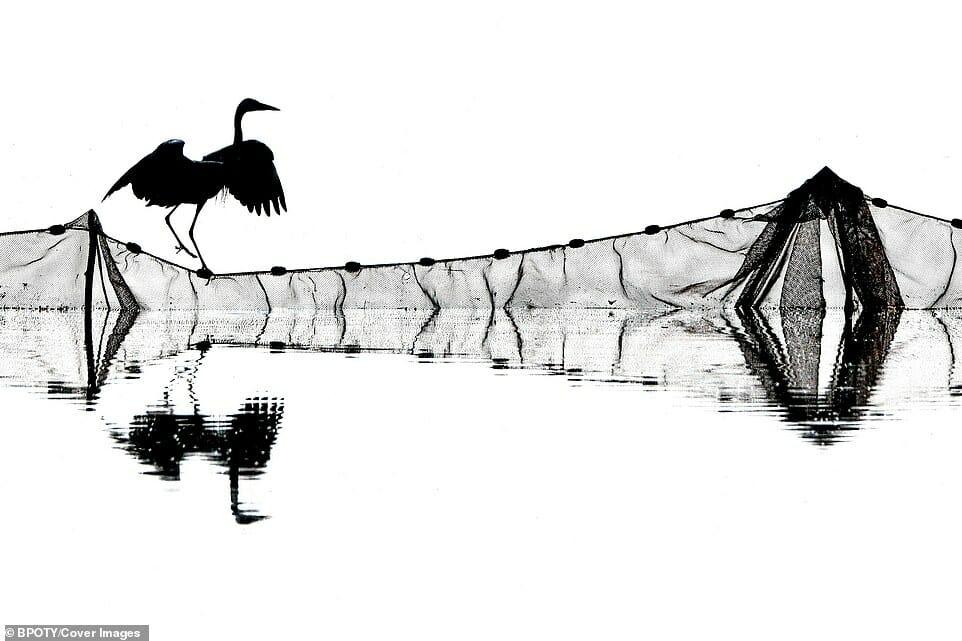fotos Bird Photographer Year 11