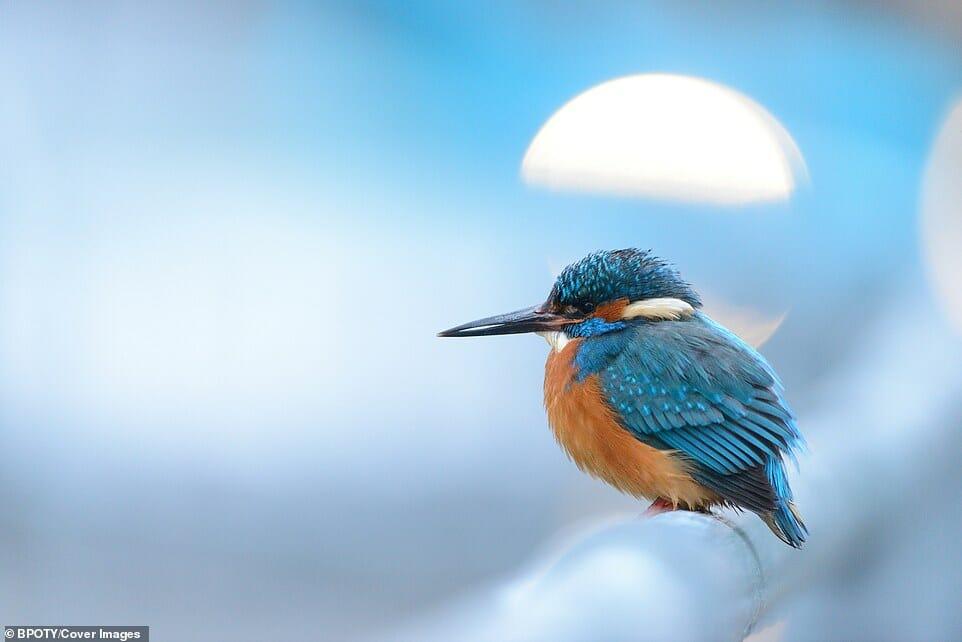 fotos Bird Photographer Year 12