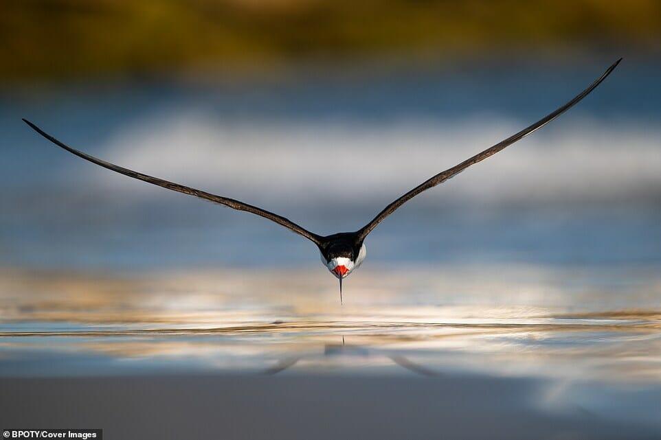 fotos Bird Photographer Year 16
