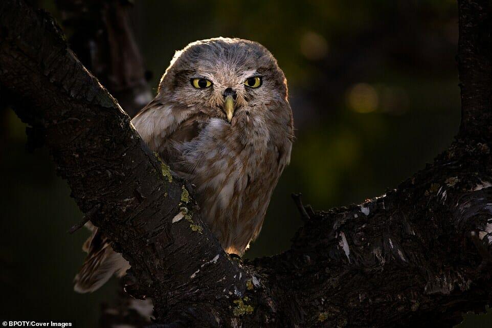 fotos Bird Photographer Year 18