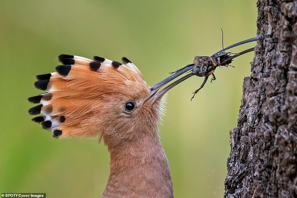 fotos Bird Photographer Year 2