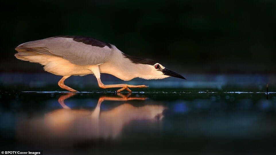 fotos Bird Photographer Year 4