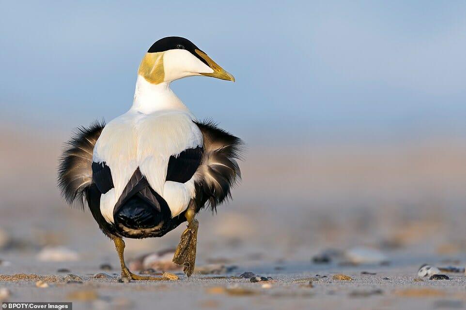 fotos Bird Photographer Year 6