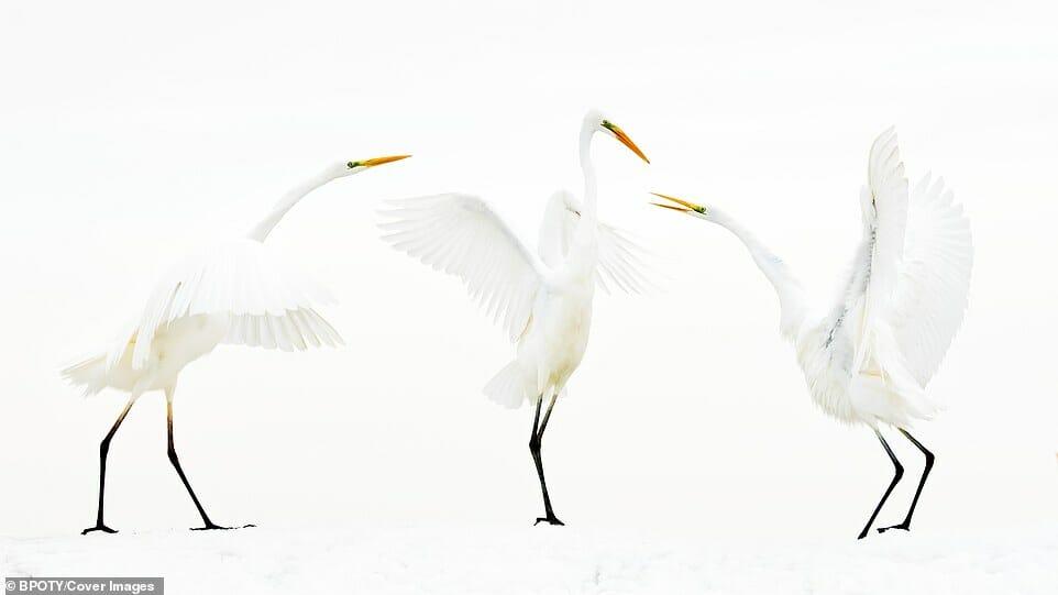 fotos Bird Photographer Year 7