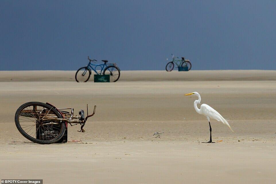 fotos Bird Photographer Year 9