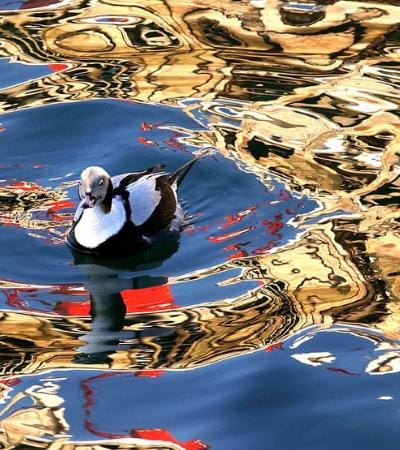 Aqui vão as 20 melhores fotos do incrível Bird Photographer of the Year