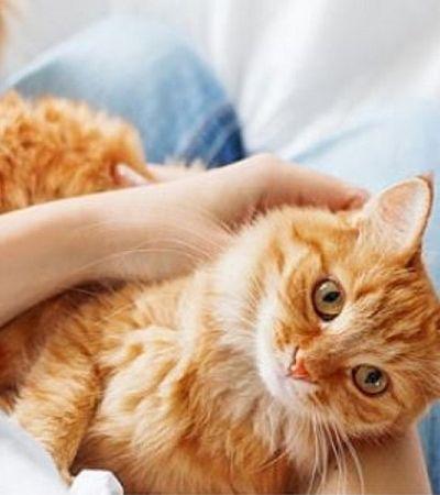 Dia Internacional do Gato: 4 dicas para agradar o verdadeiro dono da sua casa
