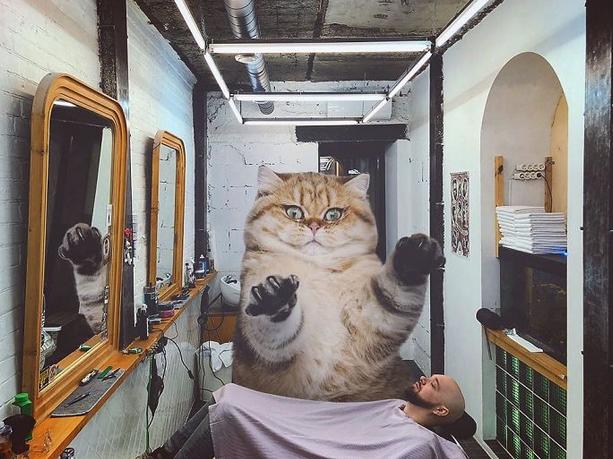 gato gigante barbeiro
