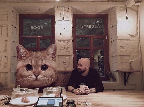 gato gigante café