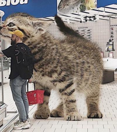 Como a Terra seria se os gatos fossem maiores que os humanos