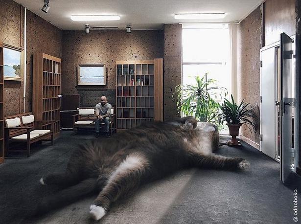 gato gigante casa