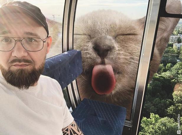 gato gigante janela trem