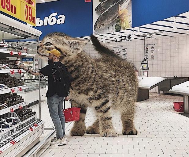 gato gigante mercado
