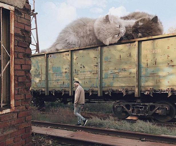 gato gigante muro plantas
