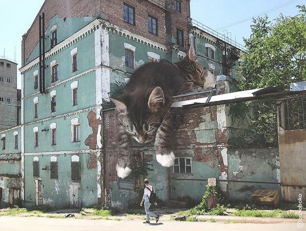 gato gigante muro