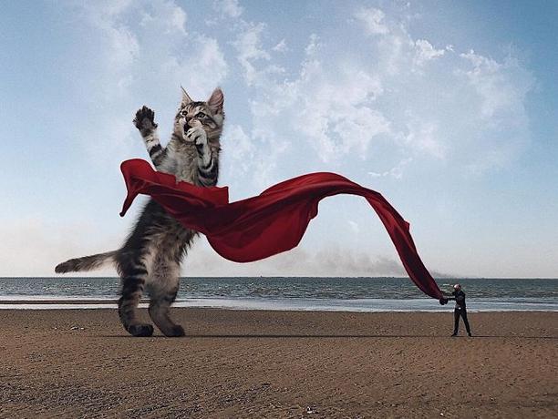 gato gigante praia