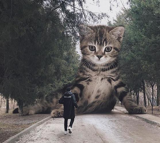 gato gigante rua