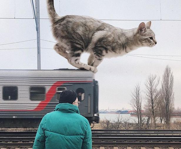 gato gigante trem