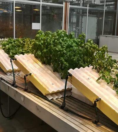 Primeira telha hidropônica para cultivo é criada por agrônomo brasileiro