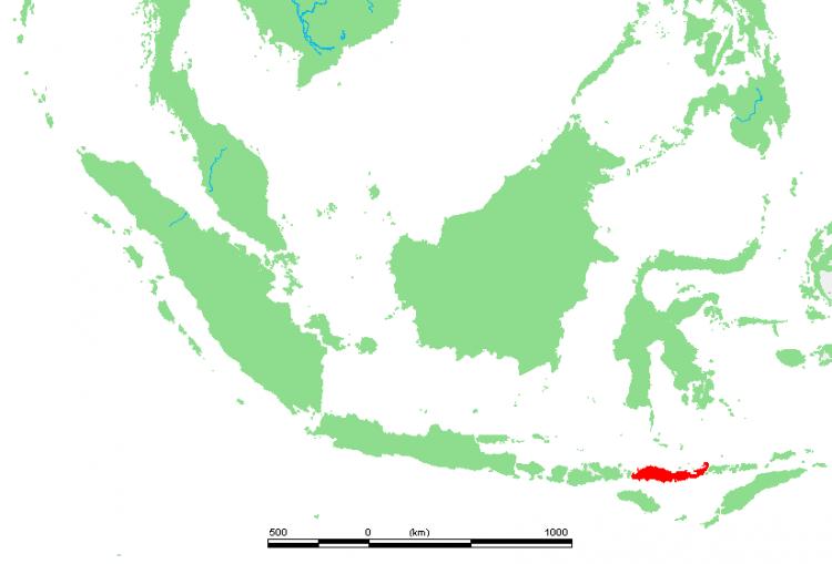 mamíferos ilha indonésia 1