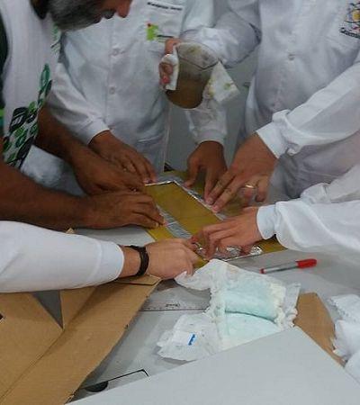 Estudantes brasileiros criam fralda biodegradável feita de mandioca