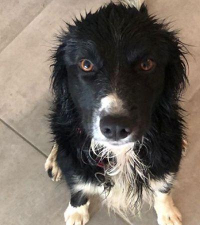 As fotos mais recentes dos cachorros vira hit no Twitter