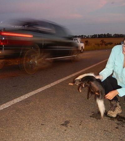 Bióloga brasileira ganha prêmio internacional por evitar morte de animais em rodovias