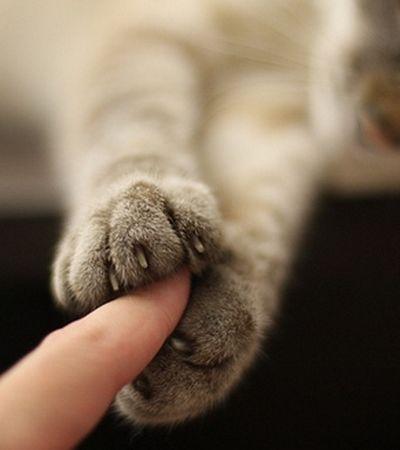 Gatos se afeiçoam a donos da mesma maneira que crianças com os pais, aponta estudo