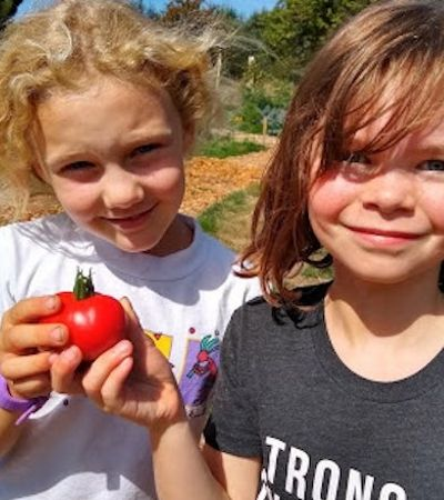 Escola transforma terreno baldio em horta e produz alimentos para pessoas necessitadas
