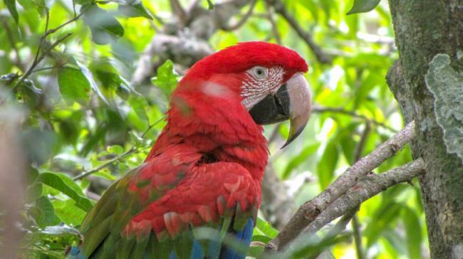 atlas online biodiversidade brasileira 2