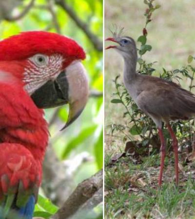 O atlas online que reúne informações de mais de 160 mil espécies brasileiras