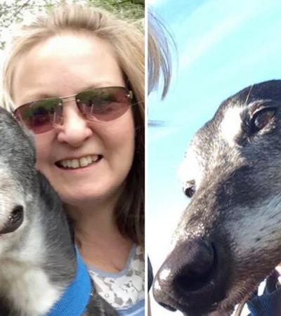 Cão salva a vida de sua dona ao farejar câncer de mama