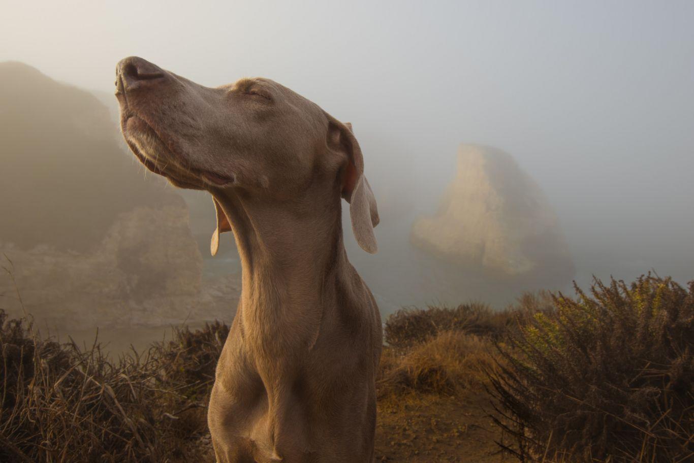 cachorro e olfato