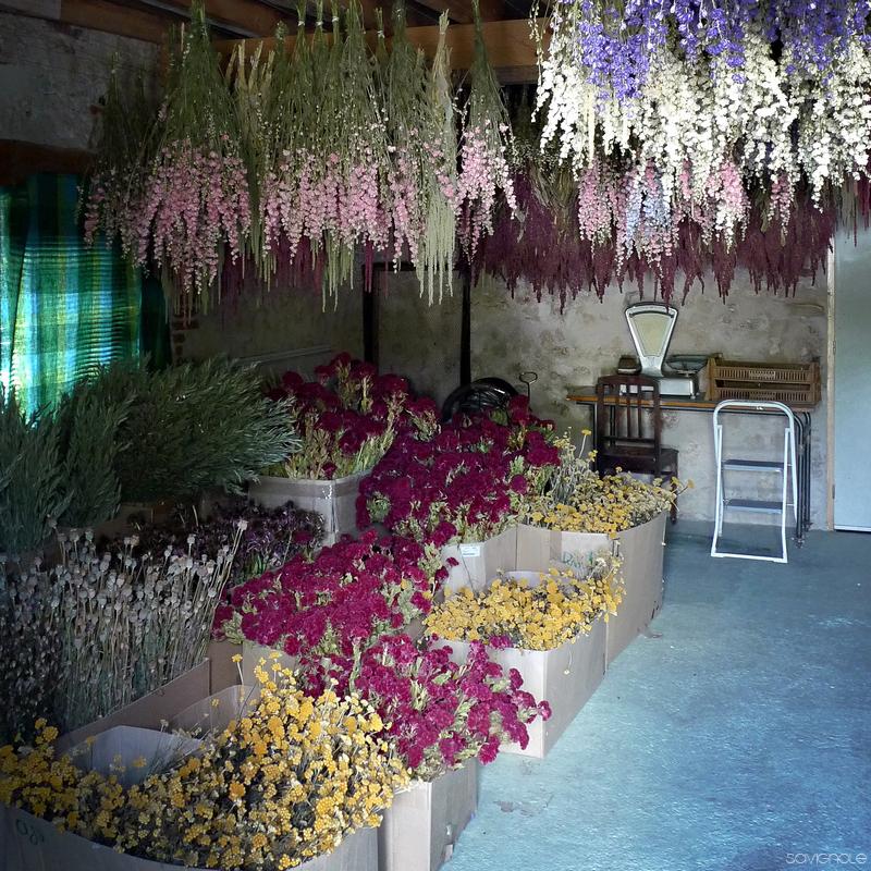 caverna de flores frança 4