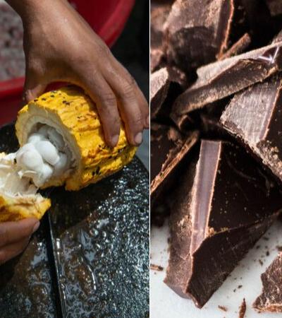 Como o chocolate pode ajudar a recuperar florestas brasileiras desmatadas