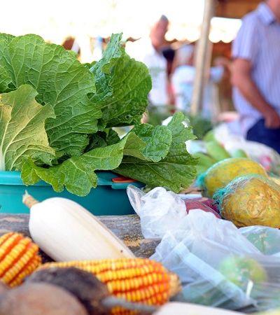 Moradores do sul são os que mais consomem orgânicos, aponta levantamento