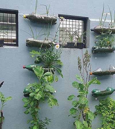 Oficina gratuita ensina a cultivar hortas verticais em garrafas e canos
