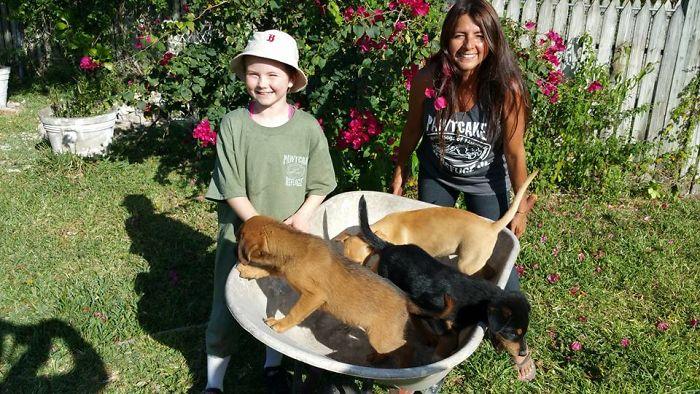 mulher abriga 97 cães dorian 10