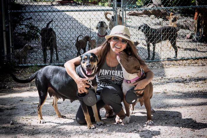 mulher abriga 97 cães dorian 11