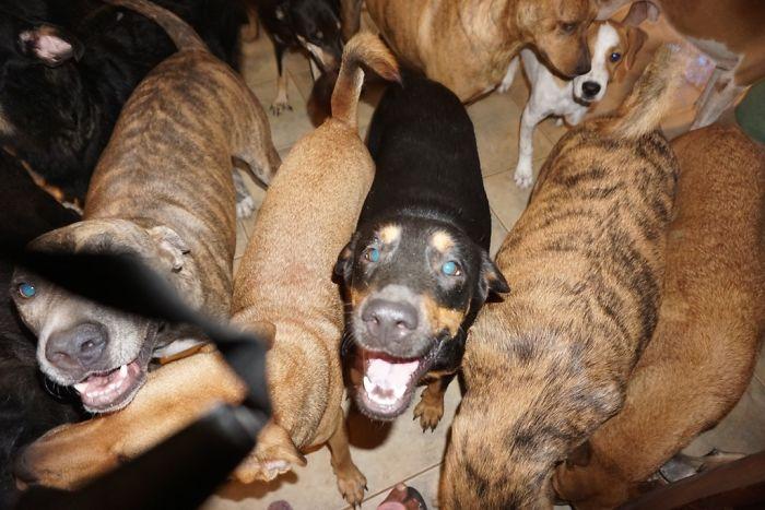 mulher abriga 97 cães dorian 2