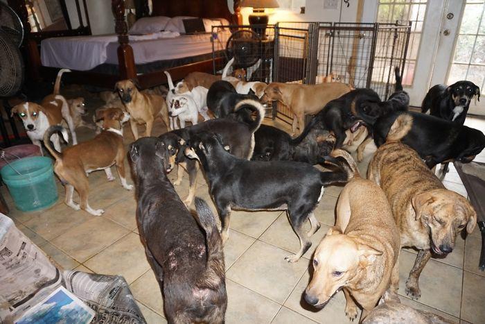 mulher abriga 97 cães dorian 3