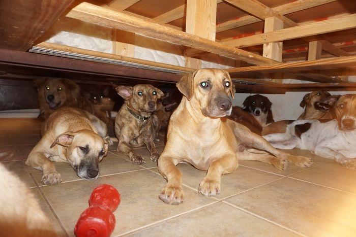mulher abriga 97 cães dorian 4